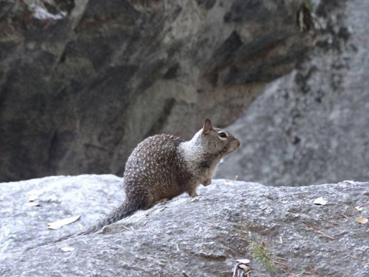 Yosemite wild life 2